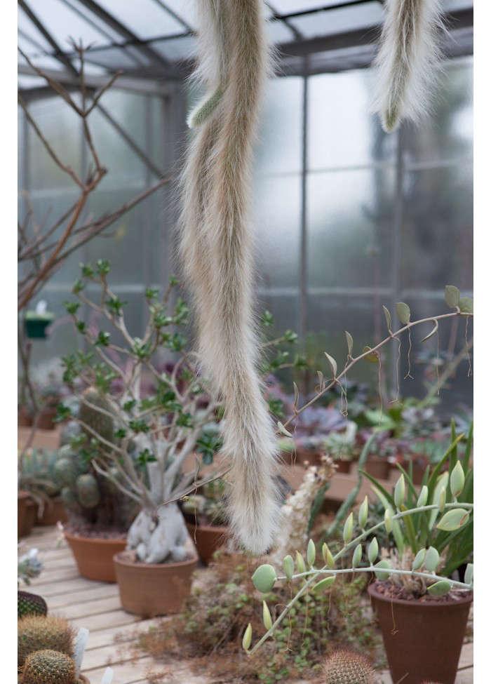 huntington-garden-greenhouse-5-laure-joliet-gardenista