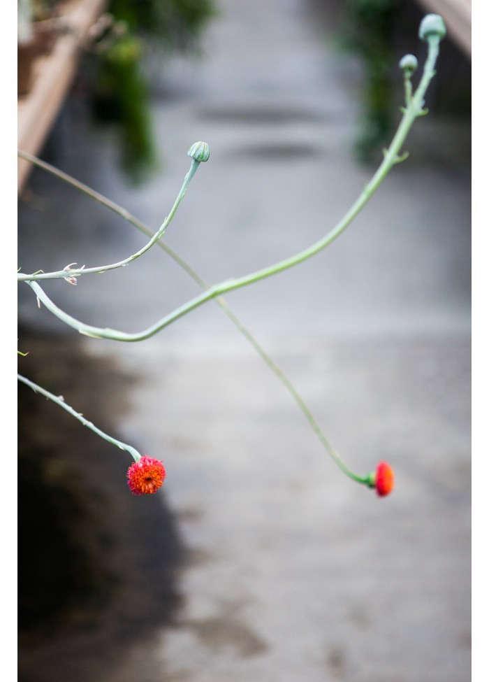 huntington-garden-greenhouse-7-laure-joliet-gardenista