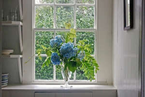 hydrangea bouquet in window, Gardenista