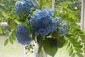 hydrangea bouquet with grape and locust, Gardenista
