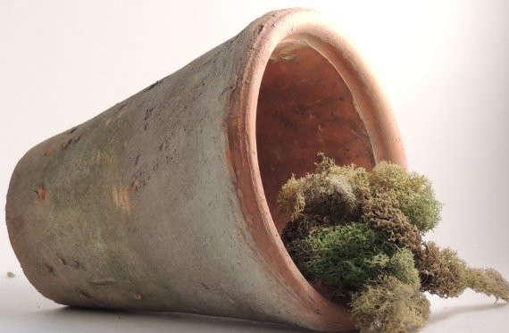 Aged Terra Cotta Flower Pot Gardenista
