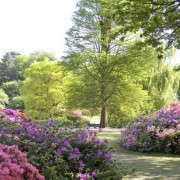 isabella-plantation-richmond-park-london-gardenista