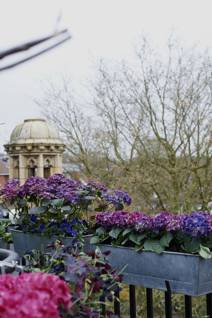 isabelle-palmer-balcony-gardener-jonathan-gooch-1-gardenista
