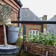 isabelle-palmer-balcony-gardener-jonathan-gooch-11-gardenista