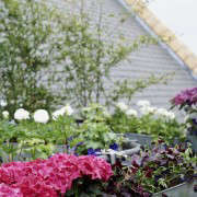 isabelle-palmer-balcony-gardener-jonathan-gooch-2-gardenista