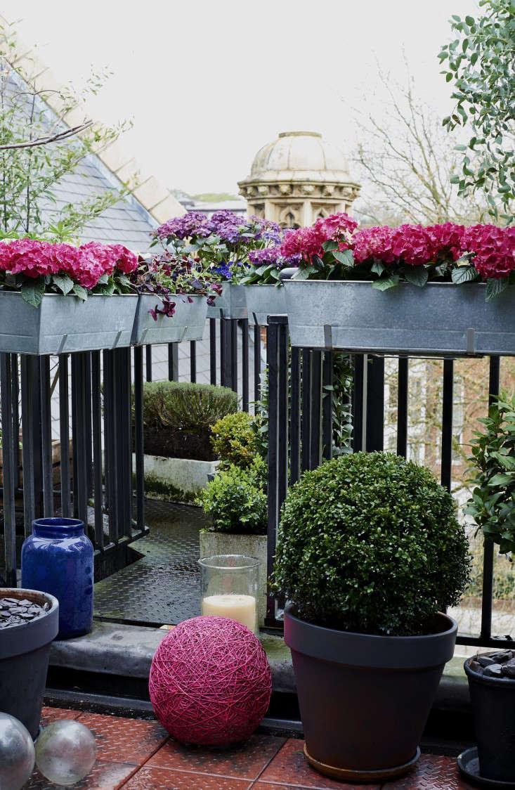 isabelle-palmer-balcony-gardener-jonathan-gooch-6-gardenista