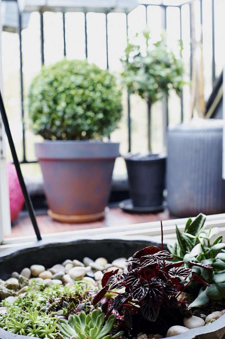 isabelle-palmer-balcony-gardener-jonathan-gooch-7-gardenista