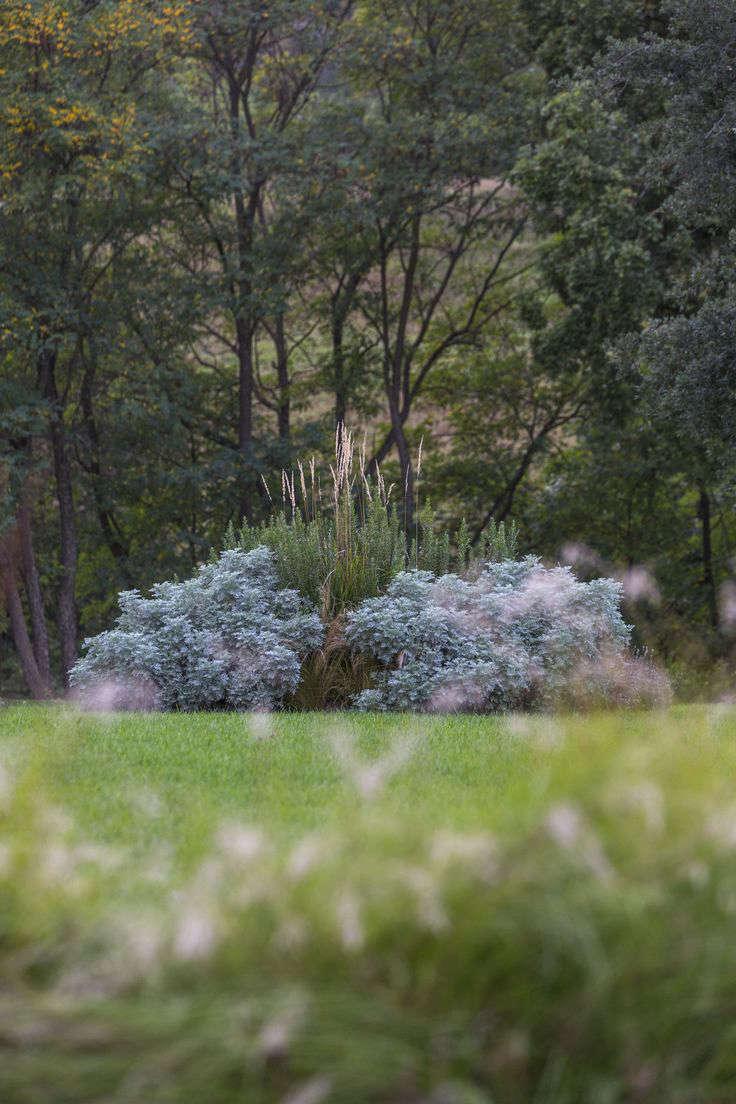 italy-cristiana-ruspa-garden-artemesia-lawn-gardenista