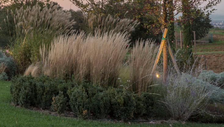 italy-cristiana-ruspa-garden-grasses-closeup-lawn-tree-supports-gardenista
