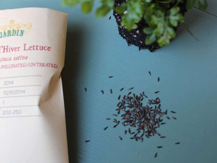jardin-heirloom-seeds-hiver-lettuce-5-gardenista