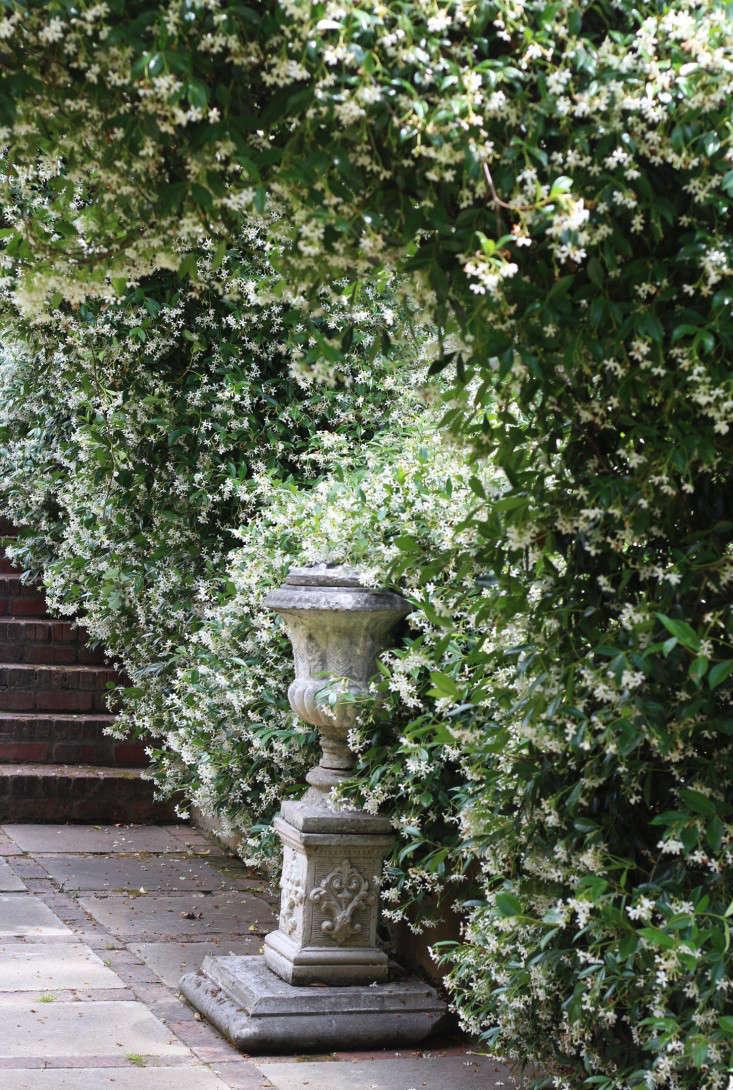 jasmineurn2-Cellars-Hohenort-Marie-Viljoen-Gardenista