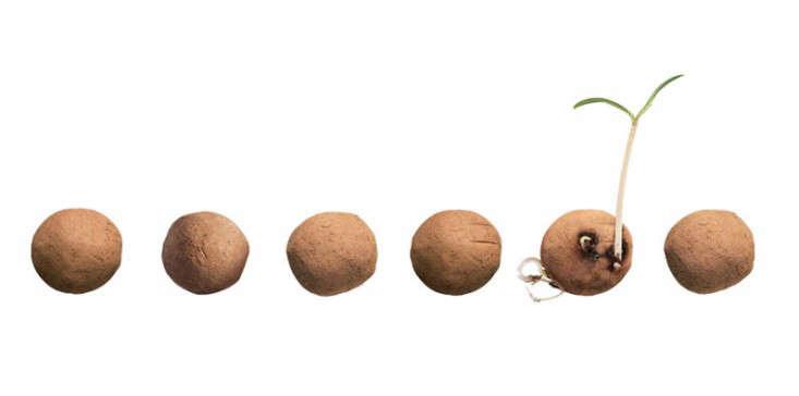 kaufmann-mercantile-seed-bombs