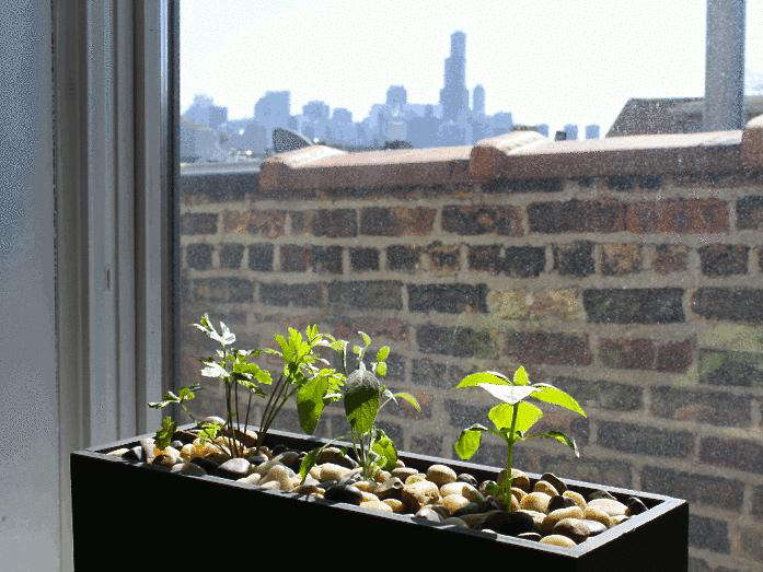 kickstarter-hydroponics-2