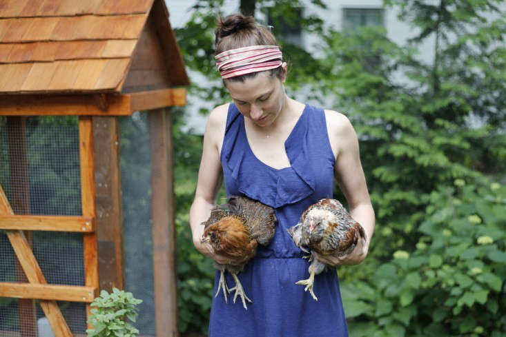 kids garden chickens by christine chitnis 10