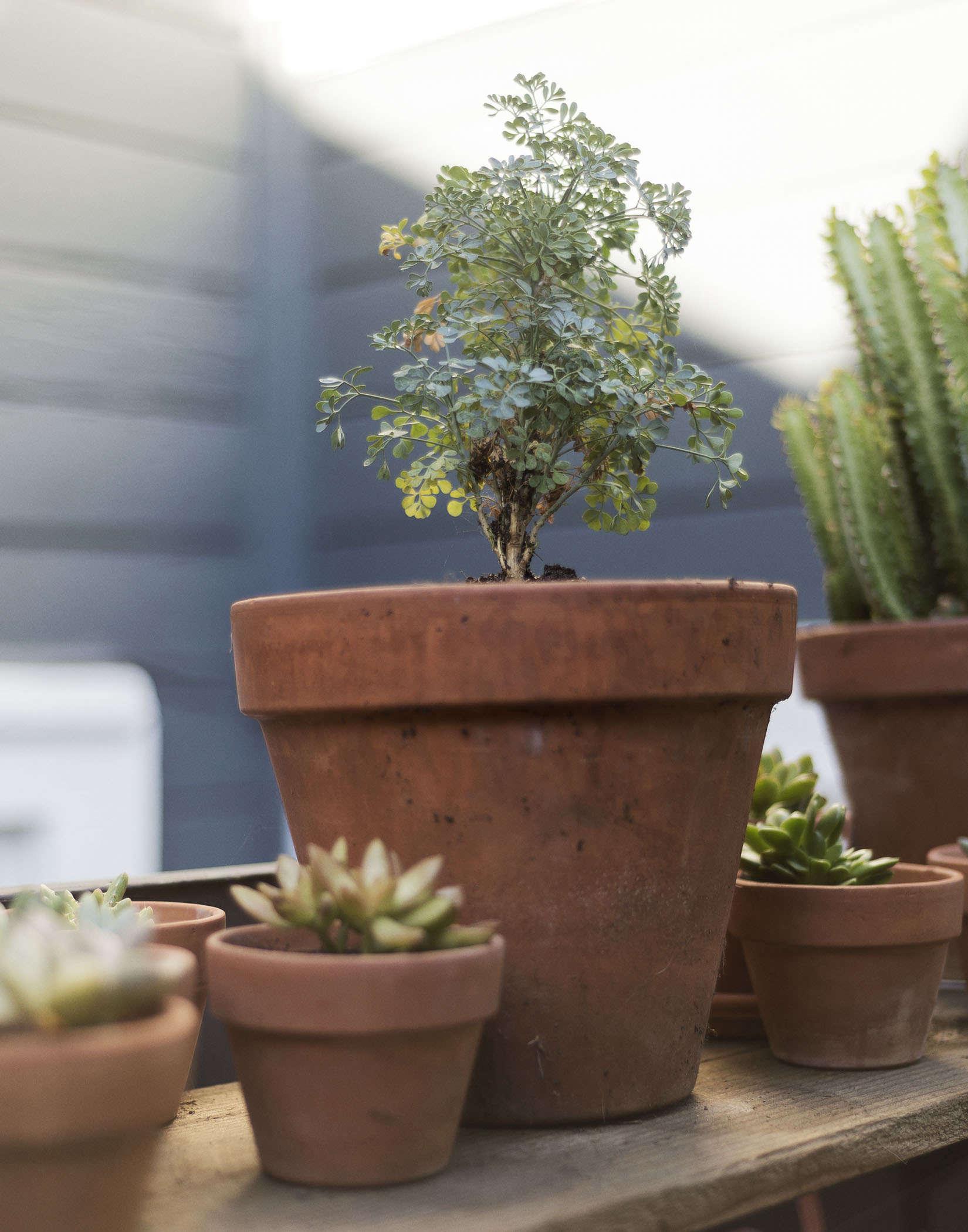 klein-garden-mission-san-francisco-gardenista-potted-plants