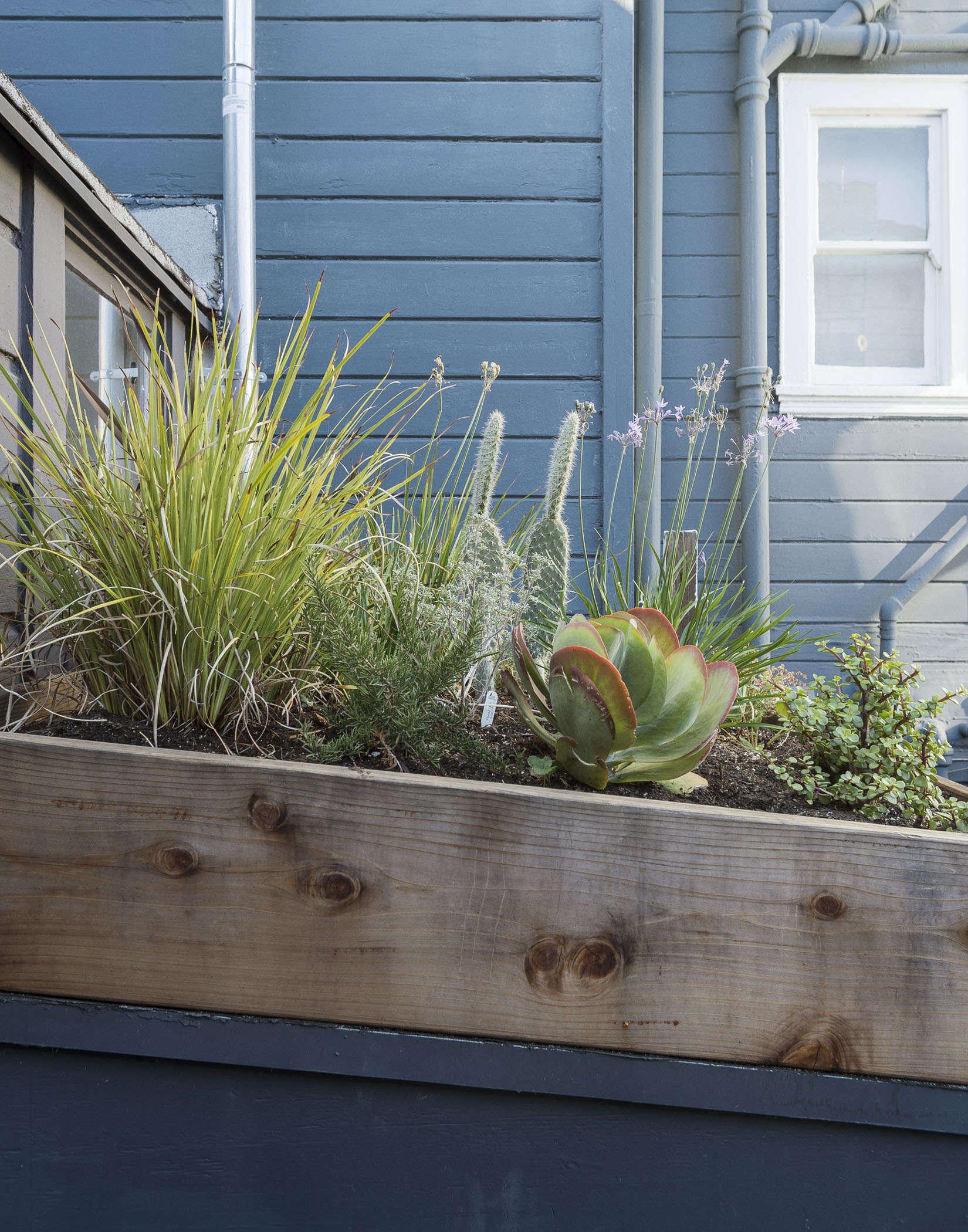 klein-garden-mission-san-francisco-gardenista-roof-garden