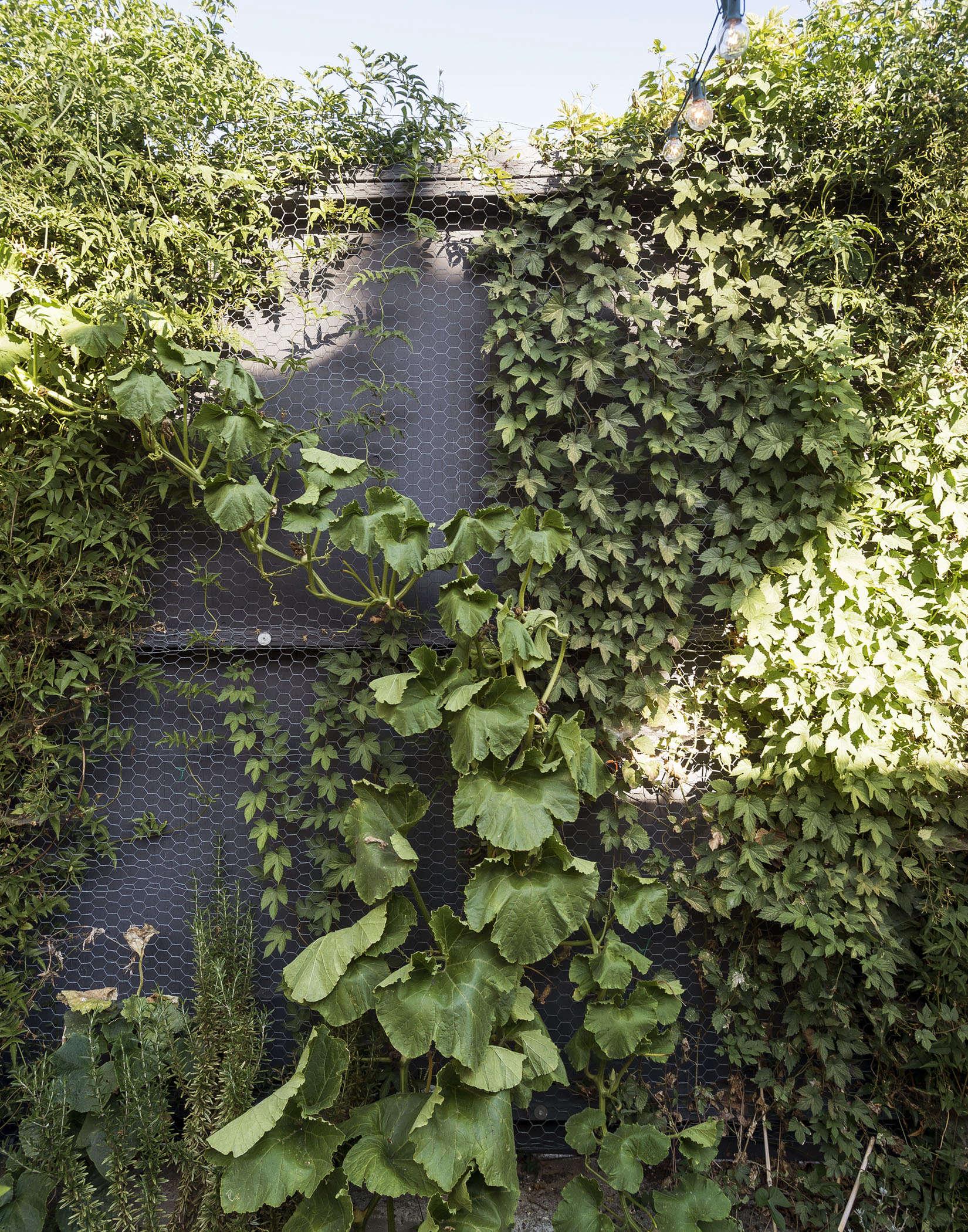 klein-garden-mission-san-francisco-gardenista-wire-mesh-fence
