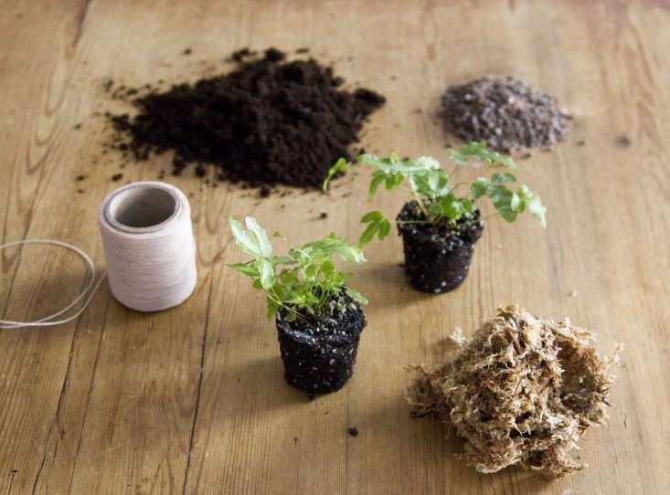 kokedama-erin-boyle-gardenista-1