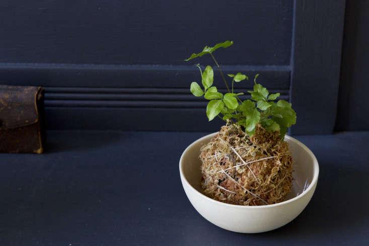 kokedama-erin-boyle-gardenista-13