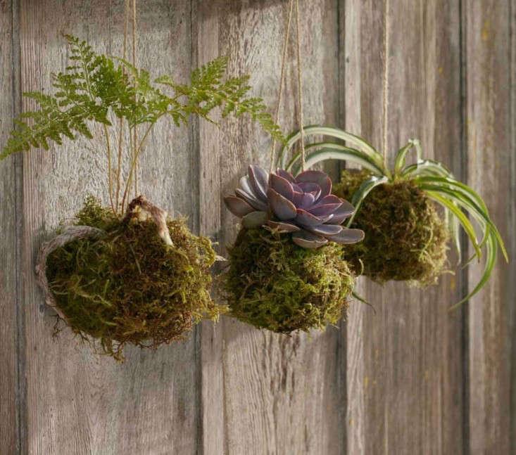 kokedama-succulents-fern-trio-gardenista
