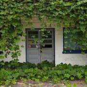 kudzo-on-old-storefront-georgia