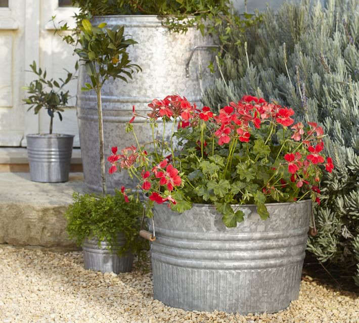 large-metal-barrel-planters-gardenista