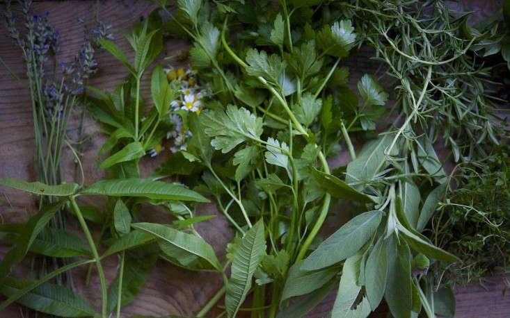 laura-silverman-herbs-gardenista