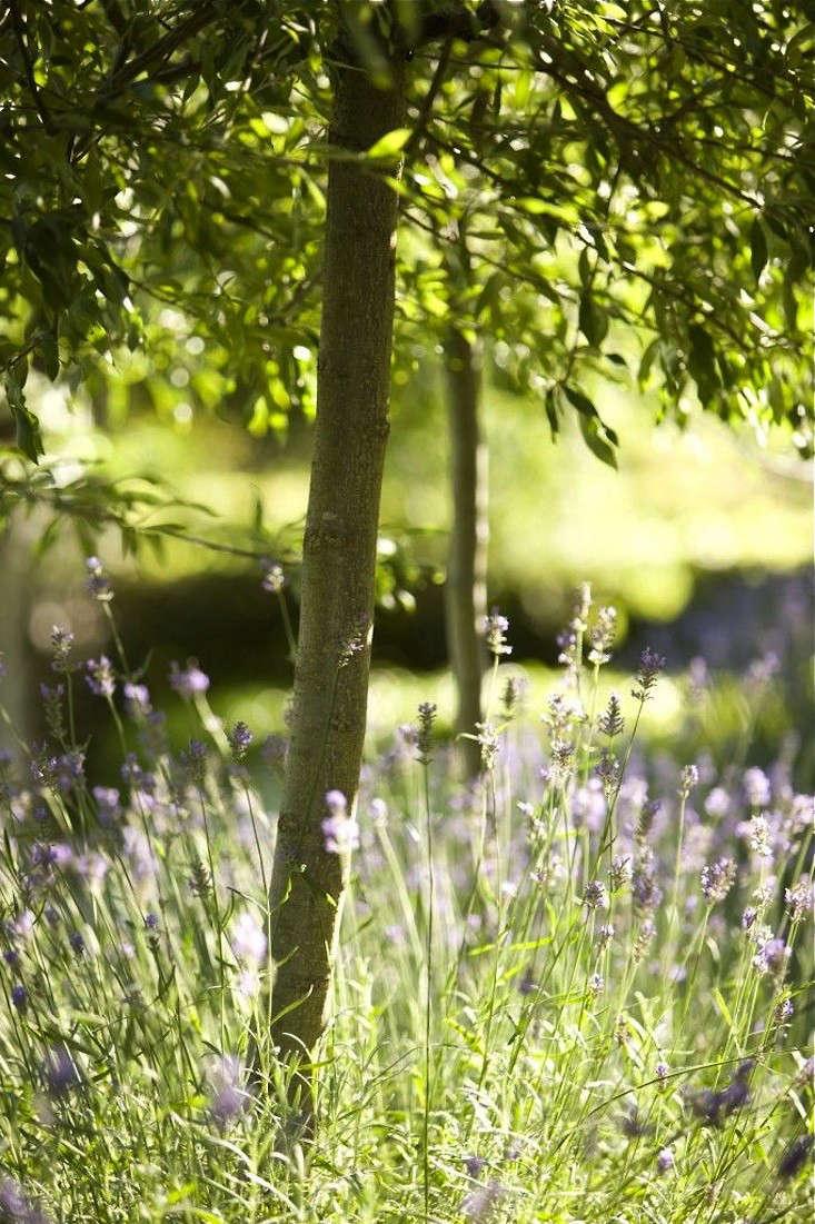 Garden Designer Visit Lavender Fields In Australia