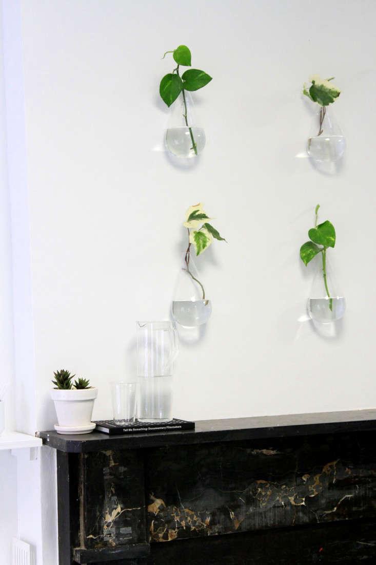 lazy-living-wall-11-erin-boyle-gardenista