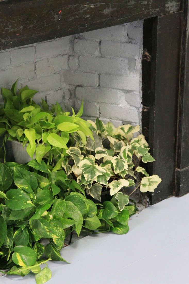 lazy-living-wall-12-erin-boyle-gardenista
