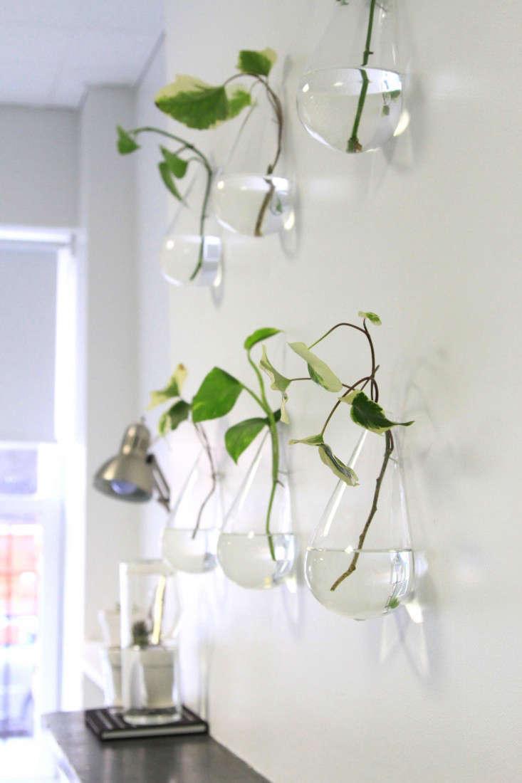 lazy-living-wall-5-erin-boyle-gardenista