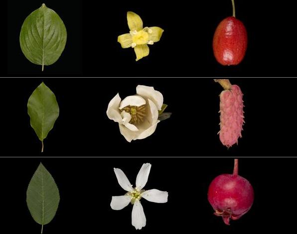 leafsnap-ID-plants-flower-app-gardenista