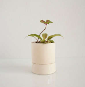 Light and Ladder Small Chromo Self-Watering Planter in Ivory I Gardenista