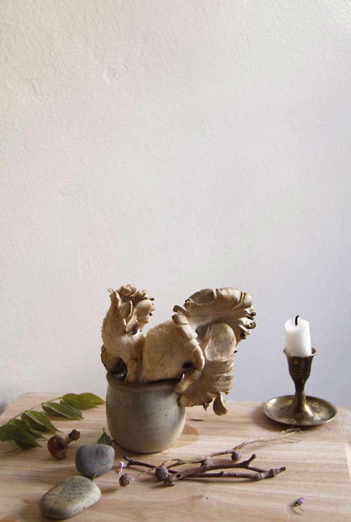 lili-cuzor-gardenista-one