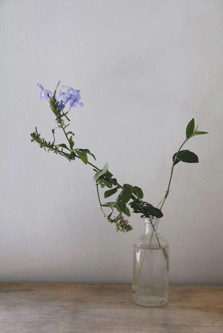 lili-cuzor-gardenista-ten