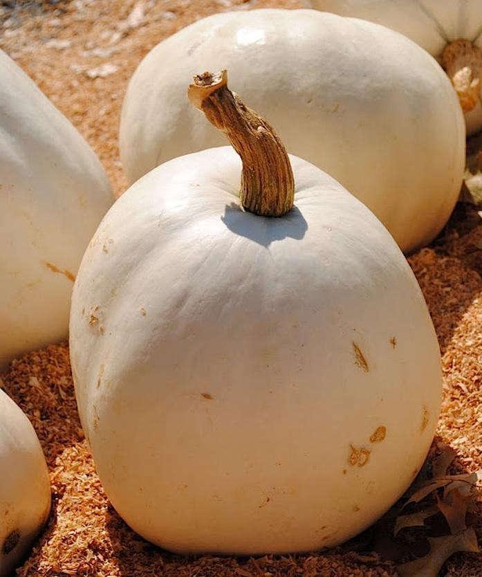 lumina-pumpkin