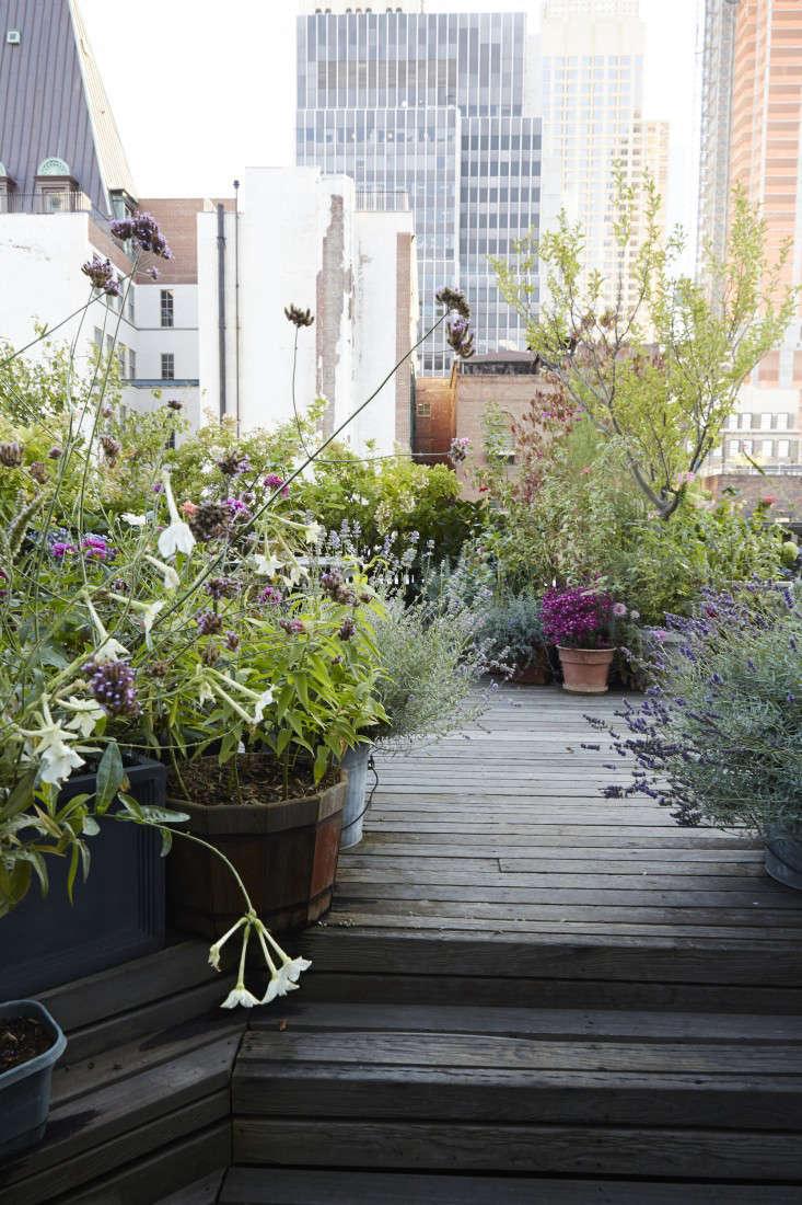 Roof Terrace Planting Ideas