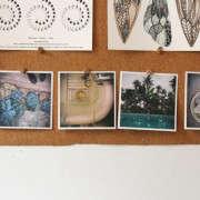 marble-and-milkweed-board-erin-boyle-gardenista