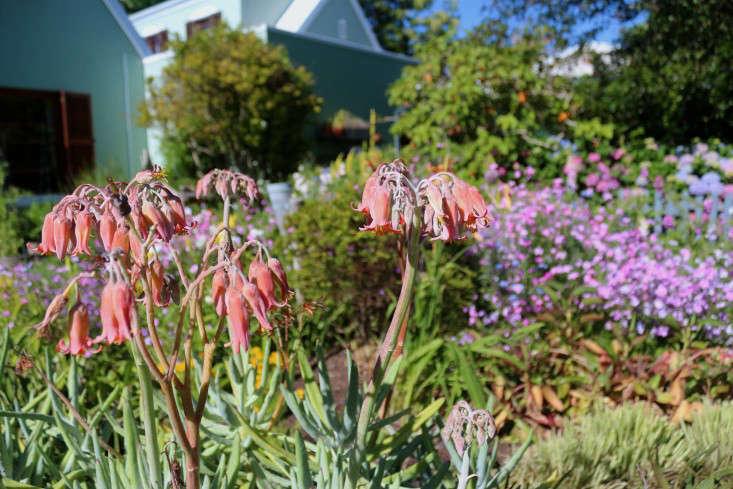 marie-viljoen-cotyledons-gardenista