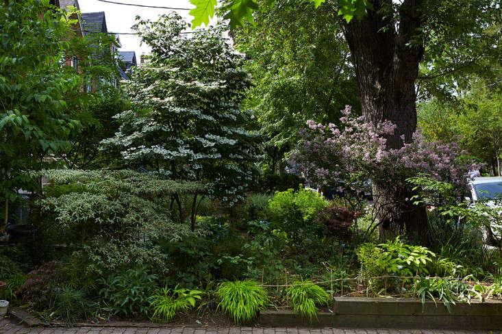 marjorie-harris-front-garden-gardenista