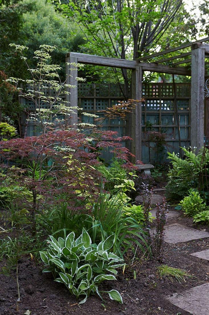 Shady Courtyard Garden