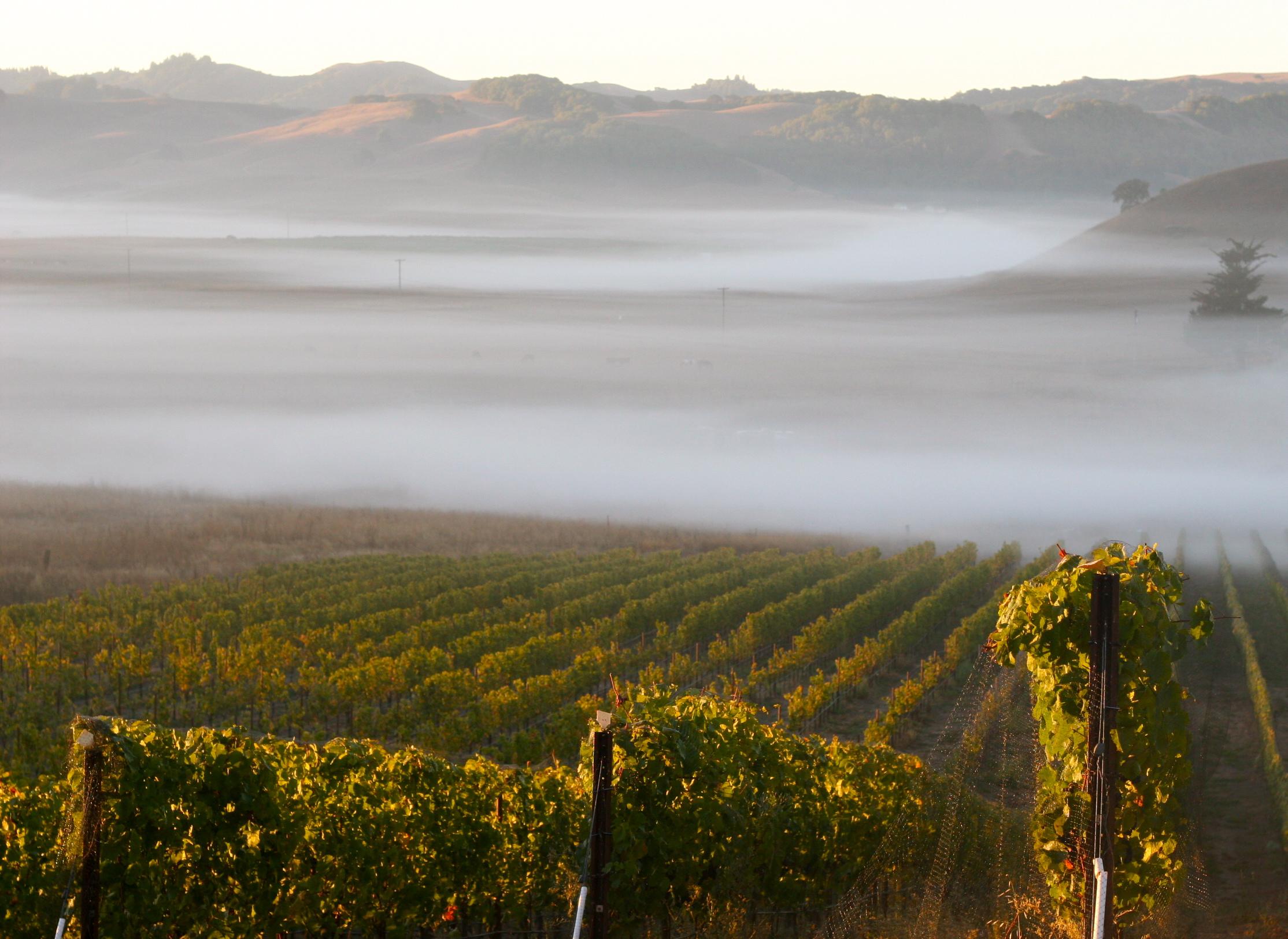 mcevoy-ranch-fog-in-petaluma-gardenista