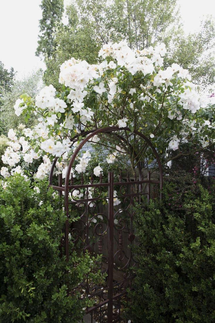 mediterranean-garden-linsteadt-19-gardenista