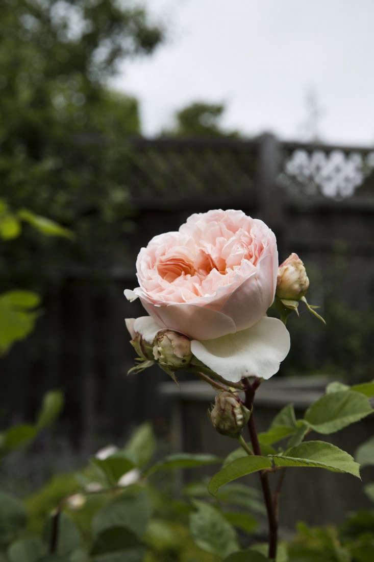 mediterranean-garden-linsteadt-2-gardenista