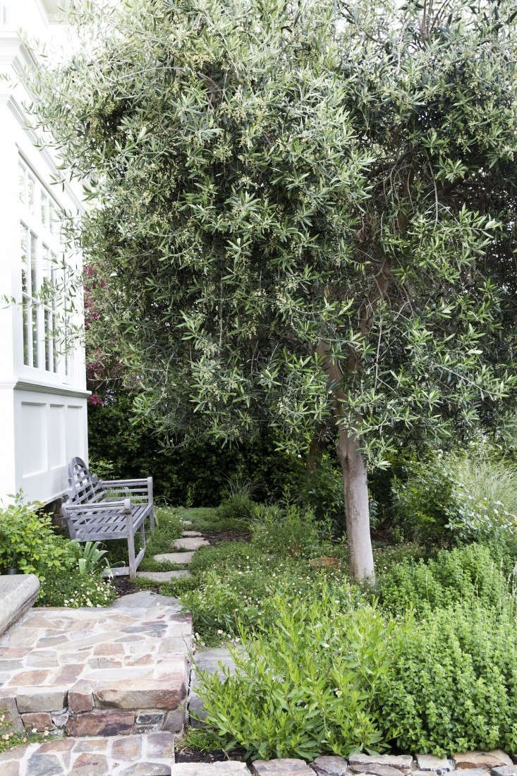 Simple landscaping ideas 10 genius gardens with an olive for Tree landscape design