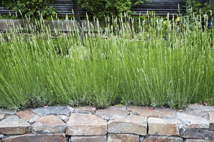 mediterranean-garden-linsteadt-9-gardenista