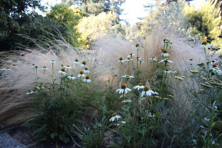 mexican-feather-grass-gardenista