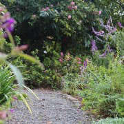 michelle-garden-gravel-path-gardenista