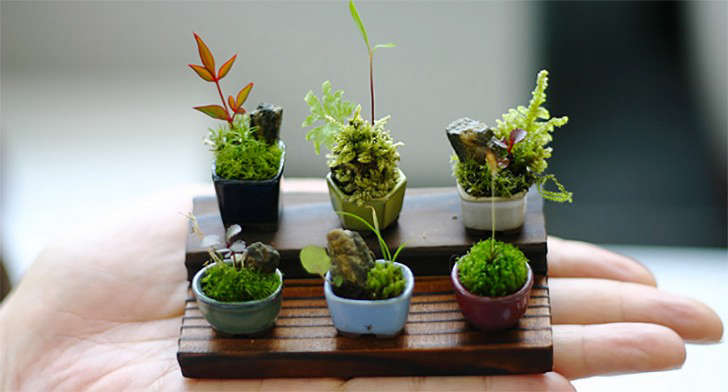 miniature-bonsai-plants-gardenista