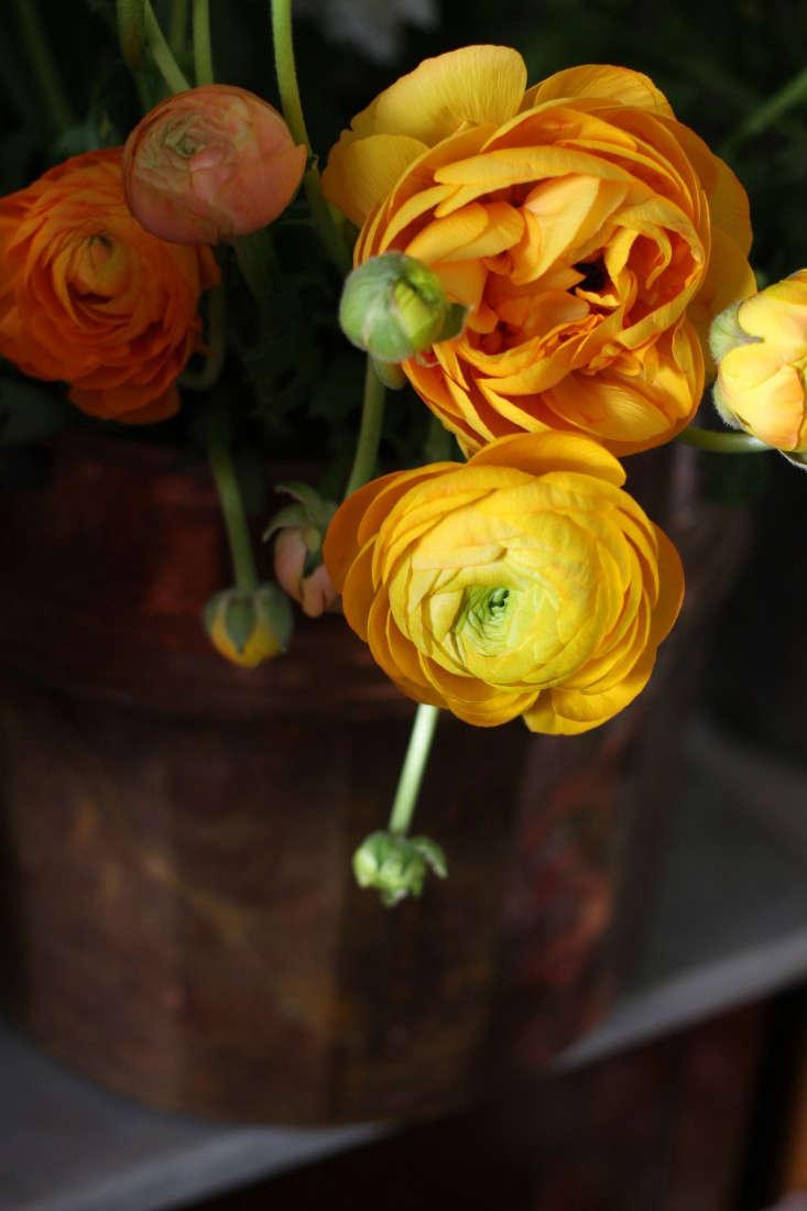 miss-pickering-orange-ranunculus